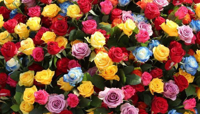 Тесты по картинкам выбери цветок и узнай сильные стороны характера